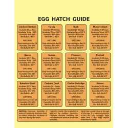 Egg Hatching Guide